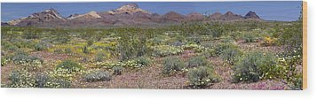 Mojave Desert Floral Display Wood Print