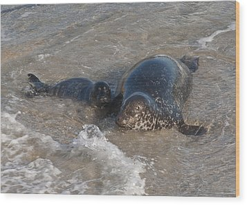 Wood Print featuring the photograph Mom And Baby Harbor Seal by Lee Kirchhevel