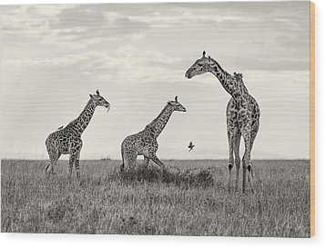 Mom And Twin Giraffes Wood Print by June Jacobsen
