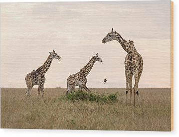 Mom Giraffe And Twins In Color Wood Print by June Jacobsen
