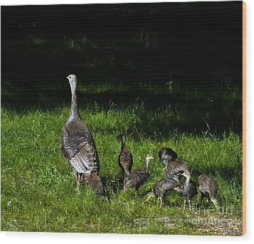 Mom..he Is Looking At Us Again Wood Print by Timothy J Berndt