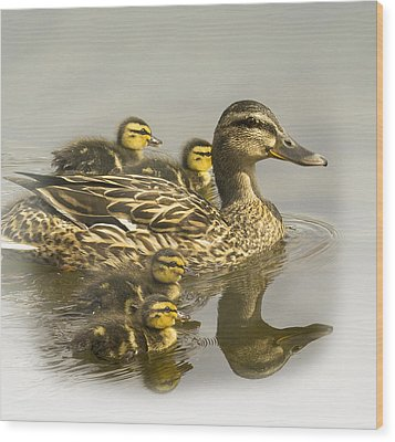 Momma And Babies Wood Print by Sonya Lang