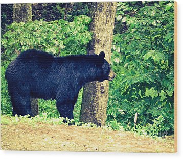 Wood Print featuring the photograph Momma Bear by Jan Dappen