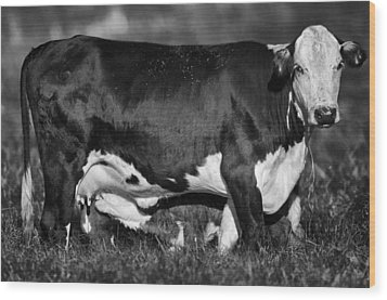 Momma Cow Wood Print by Patrick M Lynch