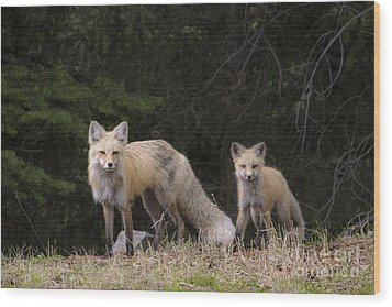 Momma Fox With Her Kit Wood Print by Sonya Lang