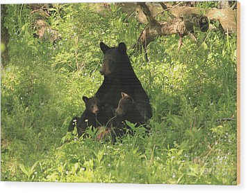 Wood Print featuring the photograph Mommy And Babies by Geraldine DeBoer