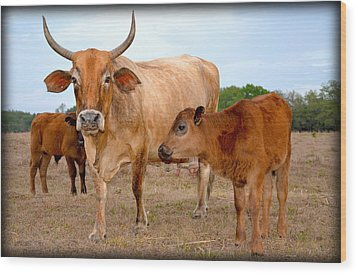 Wood Print featuring the photograph Mommy And Baby Cows by Amanda Vouglas