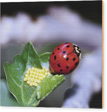 Wood Print featuring the photograph Mommy Ladybug by Yvonne Emerson AKA RavenSoul