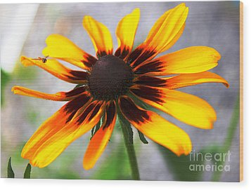 Mom's Black Eyed Susan Wood Print by Judy Palkimas