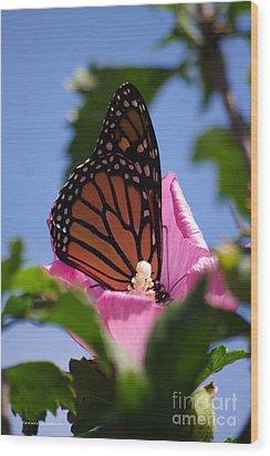 Monarch 2 Wood Print by Tannis  Baldwin