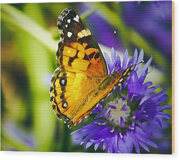 Monarch And Flower Wood Print by Debra Crank