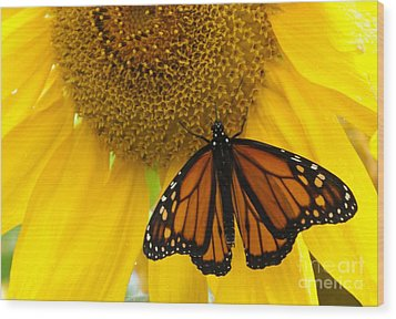 Monarch And Sunflower Wood Print by Ann Horn