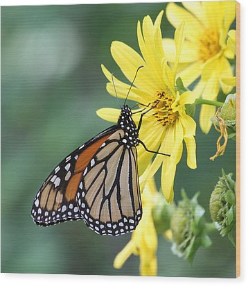 Wood Print featuring the photograph Monarch Beauty by Doris Potter