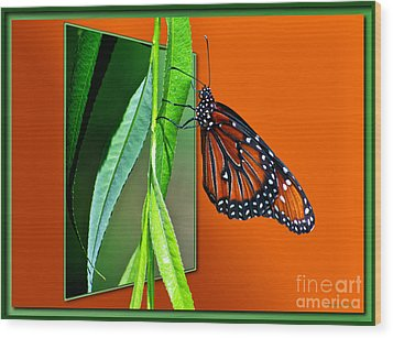 Monarch Butterfly 01 Wood Print by Thomas Woolworth