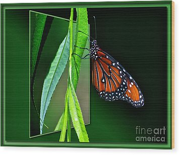 Monarch Butterfly 04 Wood Print by Thomas Woolworth