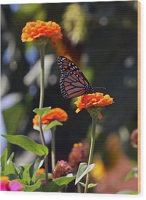 Monarch Butterfly And Orange Zinnias Wood Print by Kay Novy
