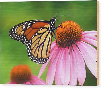 Monarch Butterfly Wood Print by Christina Rollo
