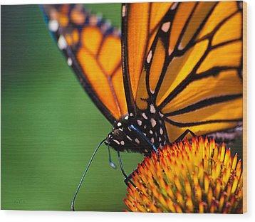 Monarch Butterfly Headshot Wood Print by Bob Orsillo