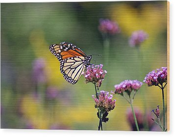 Monarch Butterfly In Field On Verbena Wood Print by Karen Adams