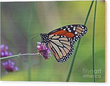 Monarch Butterfly In Garden Wood Print by Karen Adams