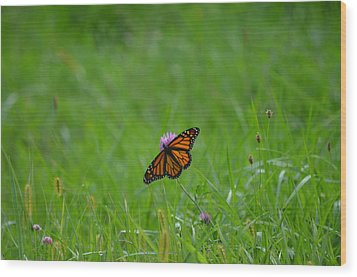 Wood Print featuring the photograph Monarch Butterfly by James Petersen
