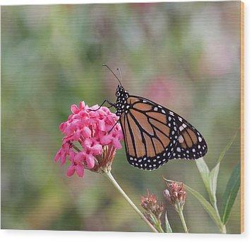 Monarch Butterfly Wood Print by Kim Hojnacki
