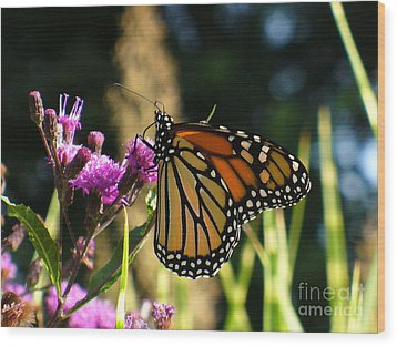 Wood Print featuring the photograph Monarch Butterfly by Lingfai Leung