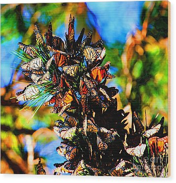 Monarch Butterfly Migration Wood Print by Tap On Photo
