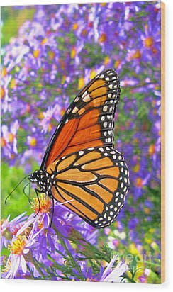 Monarch Butterfly Wood Print by Olivier Le Queinec