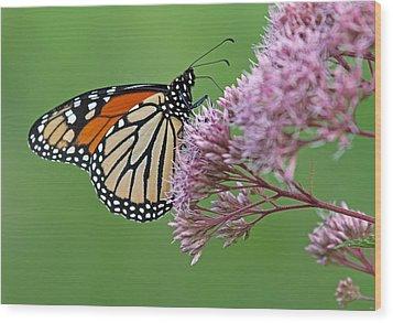 Monarch Butterfly Photography Wood Print by Juergen Roth