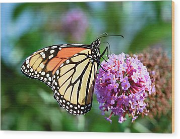 Monarch Butterfly Soaking Up The Sun Wood Print