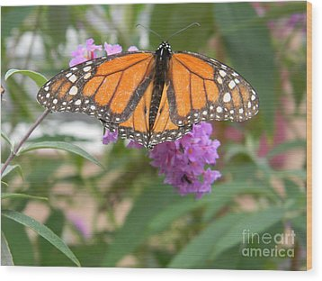 Monarch Butterfly Suckling A Flower Wood Print
