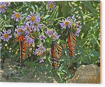 Monarch Butterfly Trio Wood Print by Susan Wiedmann