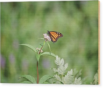 Wood Print featuring the photograph Monarch by David Porteus