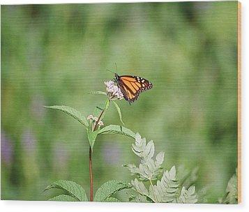 Monarch Wood Print by David Porteus