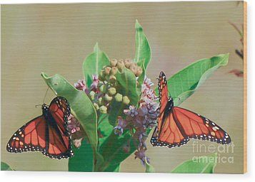 Wood Print featuring the photograph Monarch Gathering by Kerri Farley