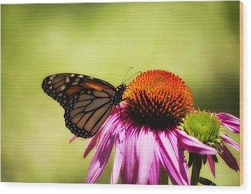 Monarch Glow Wood Print