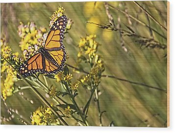 Monarch Hatch Wood Print