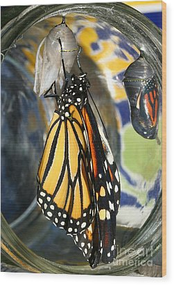 Wood Print featuring the photograph Monarch In A Jar by Steve Augustin
