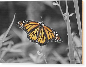 Monarch In Its Glory Wood Print