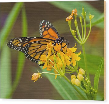 Wood Print featuring the photograph Monarch by Jane Luxton