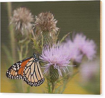 Monarch Wood Print by Jim Finch