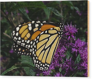 Wood Print featuring the photograph Monarch by Lingfai Leung