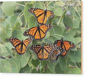 Monarch Migration Wood Print