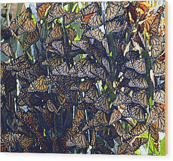 Monarch Mosaic Wood Print by AJ  Schibig