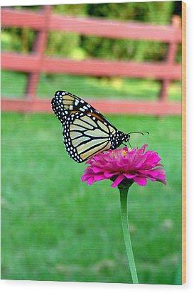 Monarch  Wood Print by Natasha Denger
