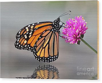 Wood Print featuring the photograph Monarch On A Pink Flower by Kathy Baccari
