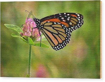 Monarch On Clover Wood Print by Ann Bridges