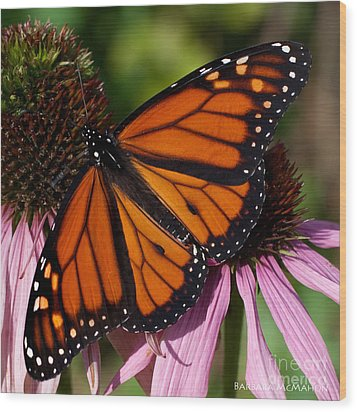 Wood Print featuring the photograph Monarch On Purple Coneflower by Barbara McMahon