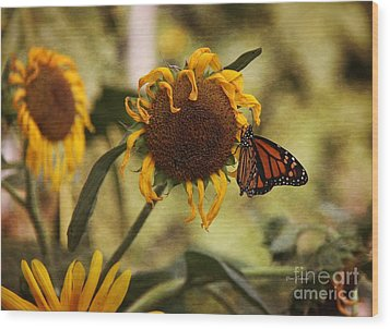 Monarch On The Sunflower Wood Print by Yumi Johnson